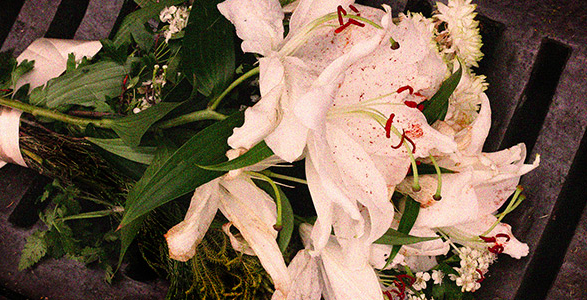 Bouquet of white lilies on a dark background.